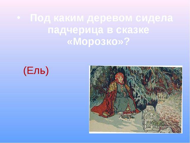 Под каким деревом сидела падчерица в сказке «Морозко»?  (Ель)