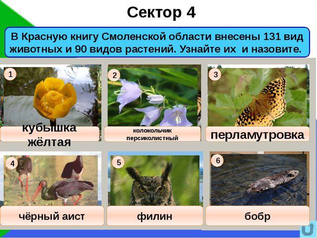 16 Сектор 10 Музыкальный вопрос Правильный ответ Ольга Борисовна Воронец