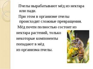 Пчелы вырабатывают мёд из нектара или пади. При этом в организме пчелы проис