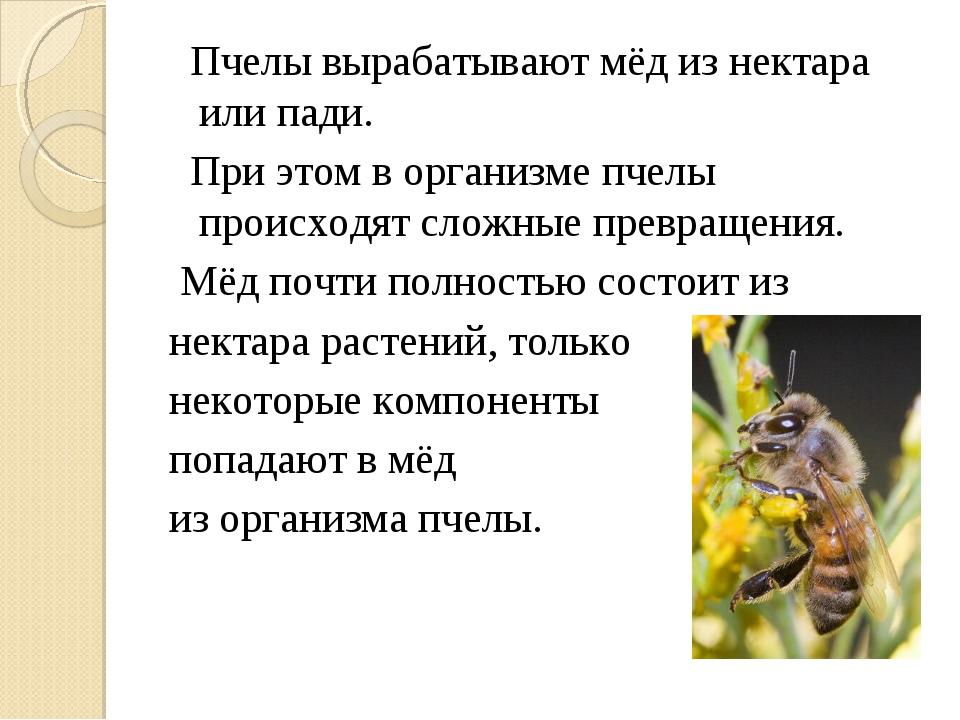 Пчелы вырабатывают мёд из нектара или пади. При этом в организме пчелы проис...