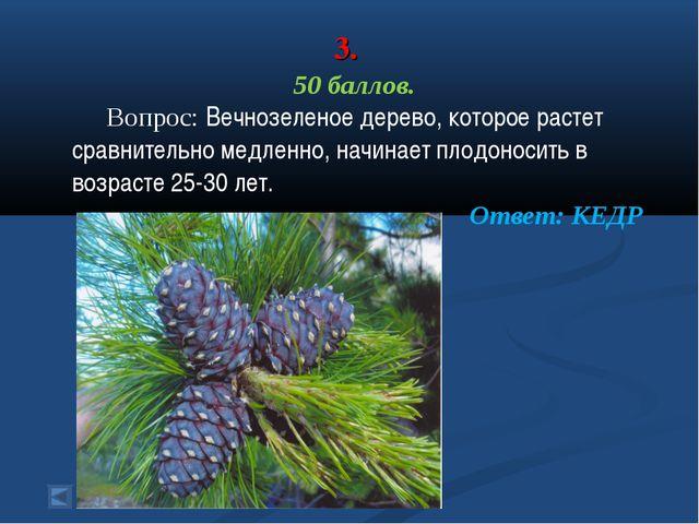 3. 50 баллов. Вопрос: Вечнозеленое дерево, которое растет сравнительно медлен...