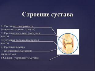 Строение сустава 1. Суставные поверхности (покрыты гладким хрящом) 2. Суставн