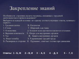 Особенности строения скелета человека, связанные с трудовой деятельностью и п