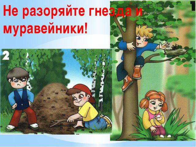 Не разоряйте гнезда и муравейники!