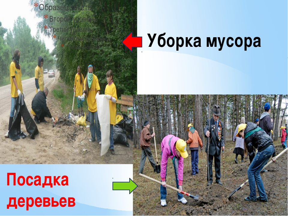 Уборка мусора Посадка деревьев
