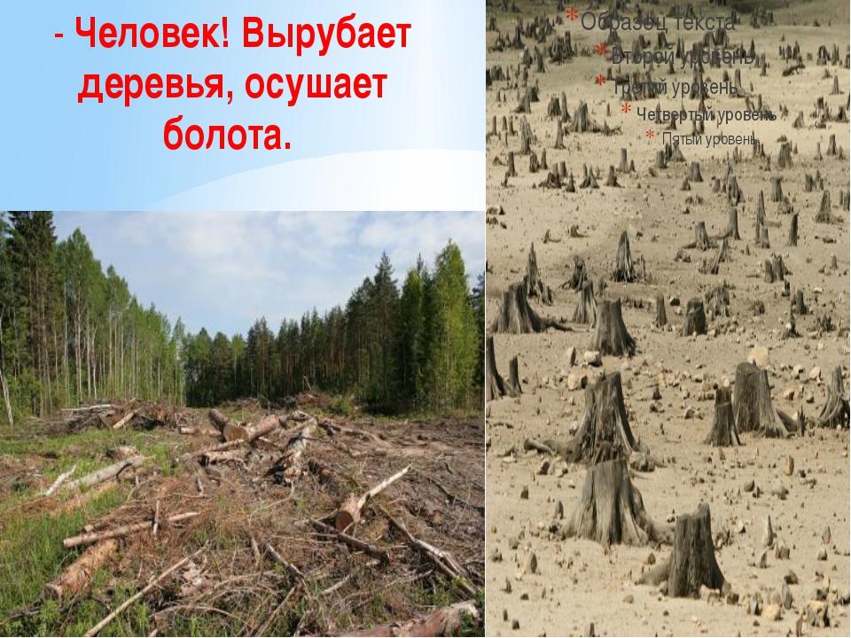 - Человек! Вырубает деревья, осушает болота.