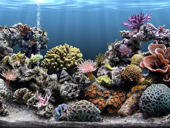 C:\Documents and Settings\UserXP\Рабочий стол\фрагмент урока 2\Reef2_salon.jpg