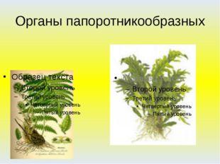 Органы папоротникообразных