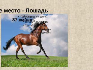 7-е место - Лошадь 87 км/час