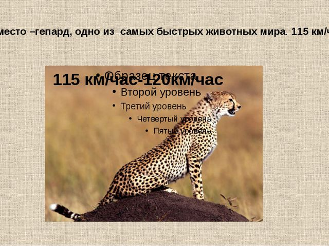 1-е место –гепард, одно из самых быстрых животных мира. 115 км/час 115 км/ча...
