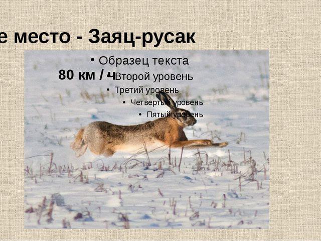 9-е место - Заяц-русак 80 км / ч