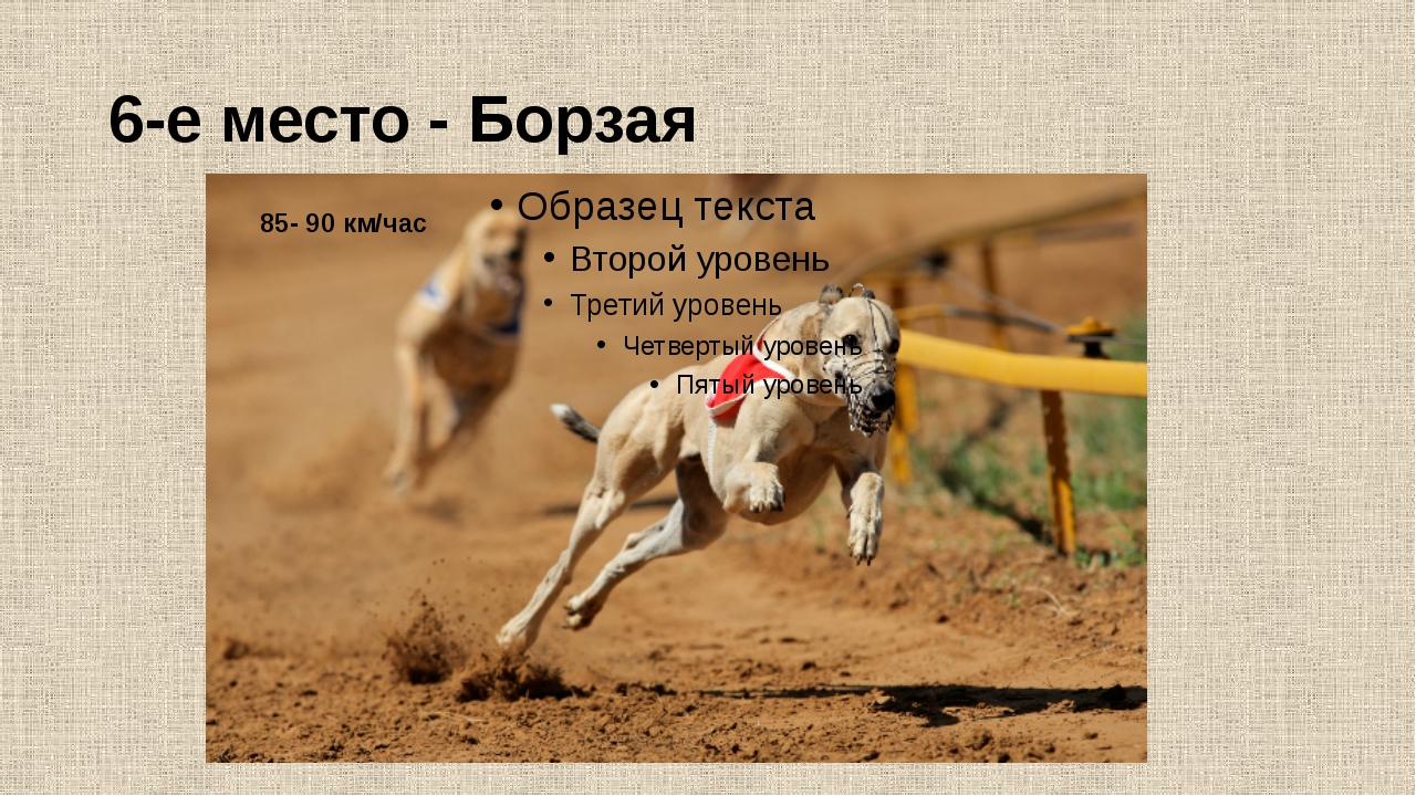 6-е место - Борзая 85- 90 км/час