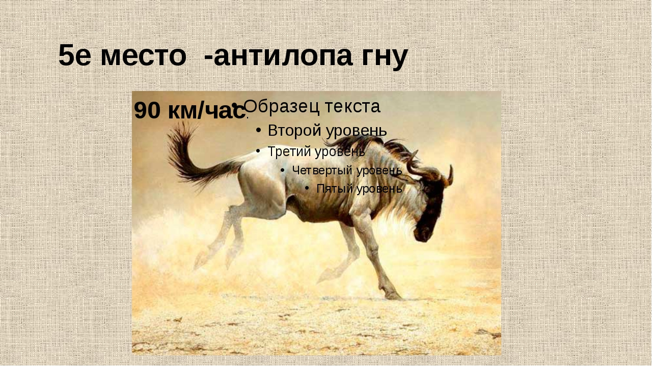 5е место -антилопа гну 90 км/час.