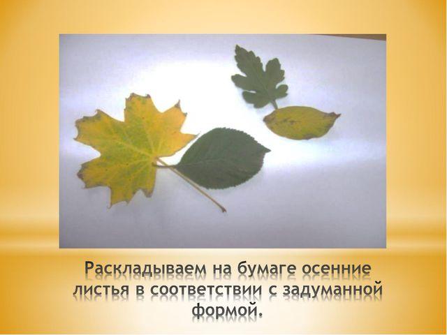 Раскладываем на бумаге осенние листья в соответствии с задуманной формой.