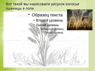 Вот такой мы нарисовали рисунок колосья пшеницы в поле.