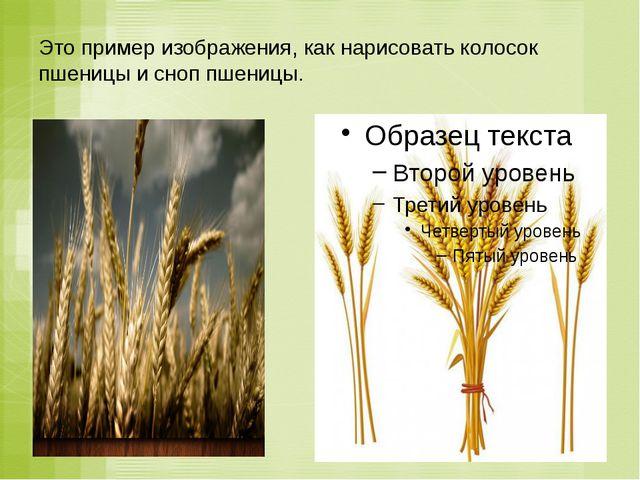 Это пример изображения, как нарисовать колосок пшеницы и сноп пшеницы.