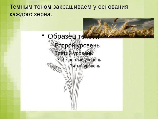 Темным тоном закрашиваем у основания каждого зерна.