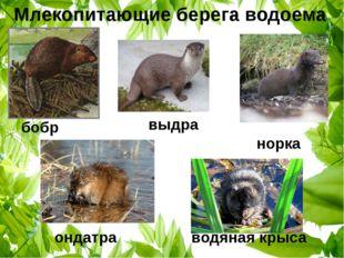 выдра бобр норка ондатра водяная крыса Млекопитающие берега водоема