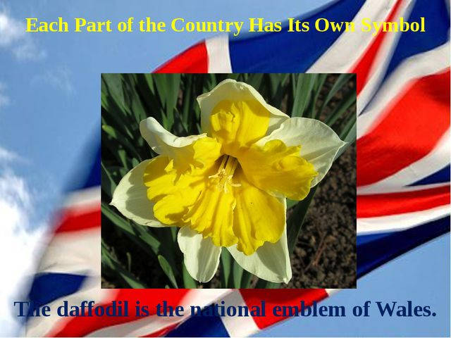 The daffodil is the national emblem of Wales. Each Part of the Country Has It...