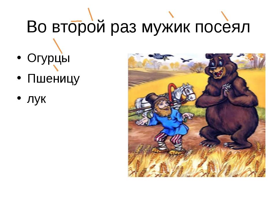 Во второй раз мужик посеял Огурцы Пшеницу лук