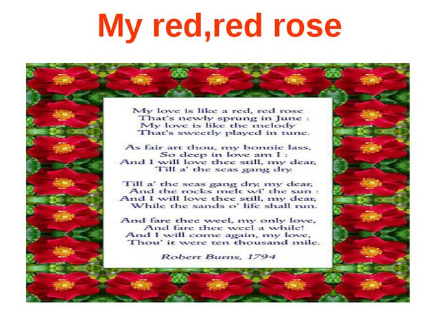 My red,red rose