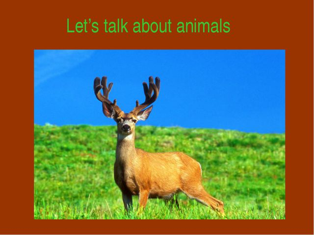 Let's talk about animals