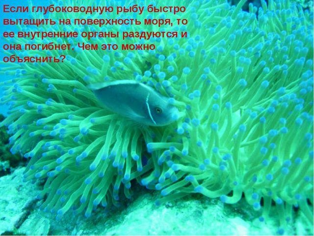 Если глубоководную рыбу быстро вытащить на поверхность моря, то ее внутренние...