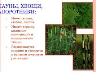 ПЛАУНЫ, ХВОЩИ, ПАПОРОТНИКИ: Имеют корни, стебли, листья. Имеют хорошо развиты