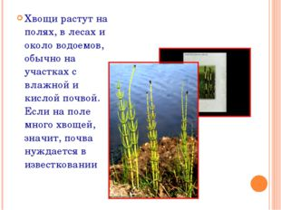 Хвощи растут на полях, в лесах и около водоемов, обычно на участках с влажной