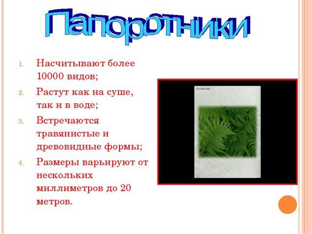 Насчитывают более 10000 видов; Растут как на суше, так и в воде; Встречаются...