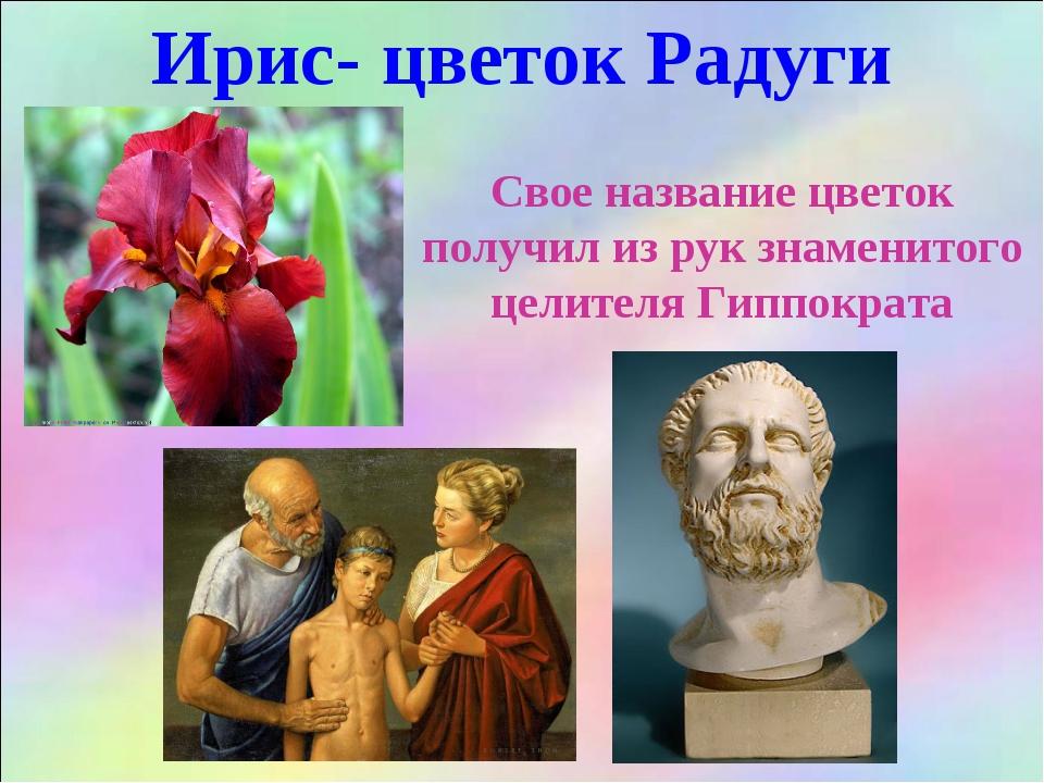Ирис- цветок Радуги Свое название цветок получил из рук знаменитого целителя...
