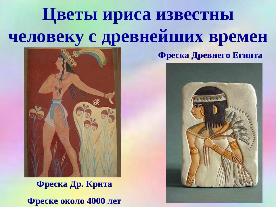 Цветы ириса известны человеку с древнейших времен Фреска Др. Крита Фреске око...