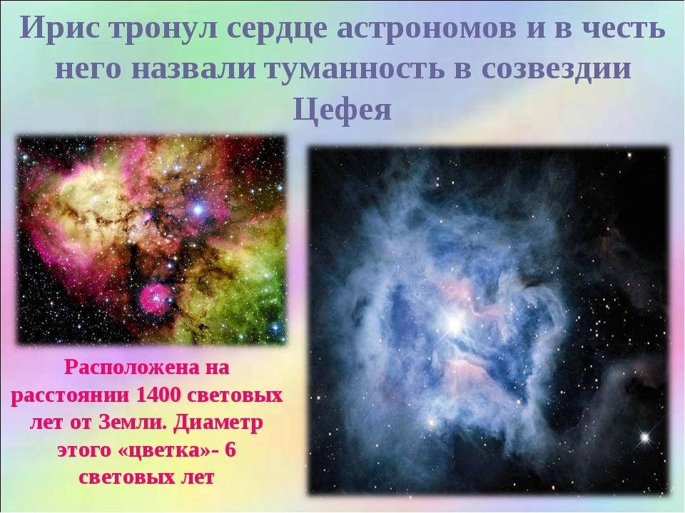 Ирис тронул сердце астрономов и в честь него назвали туманность в созвездии Ц...