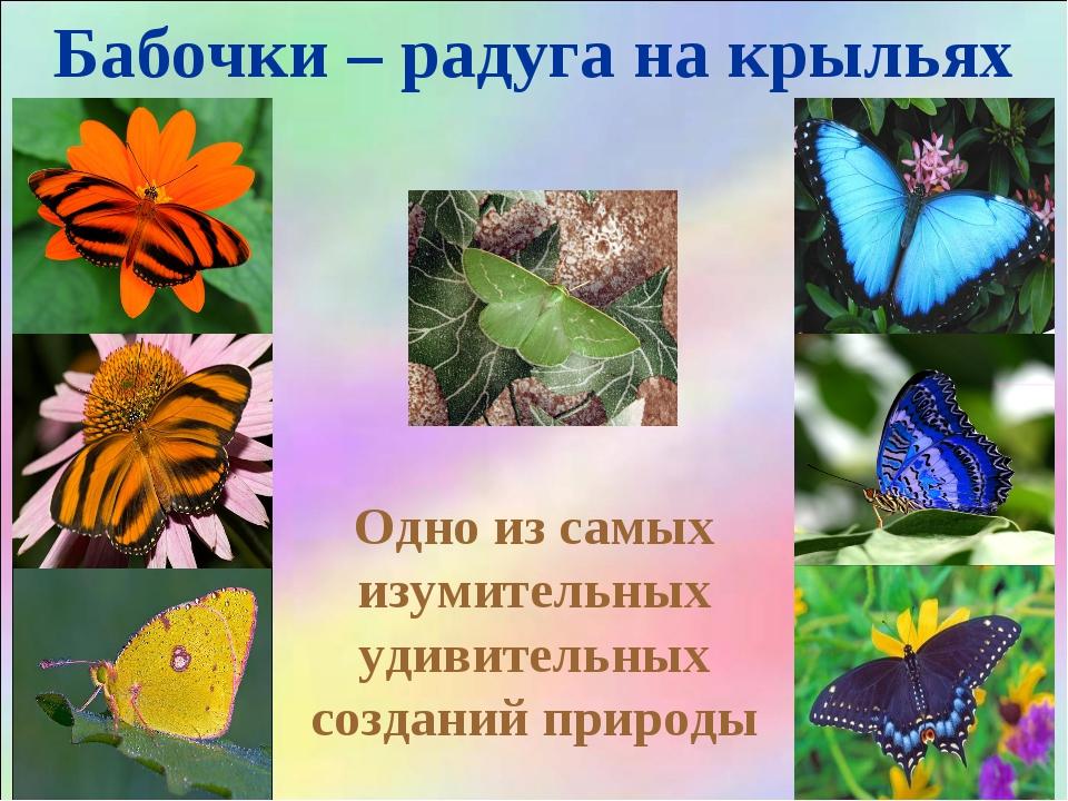 Бабочки – радуга на крыльях Одно из самых изумительных удивительных созданий...