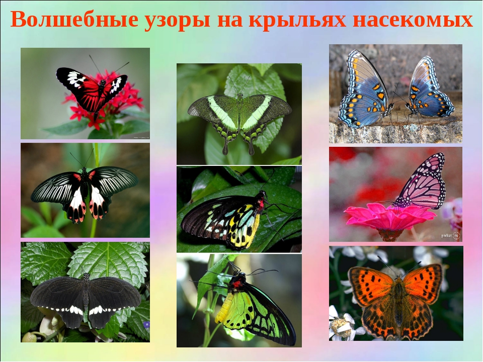 Волшебные узоры на крыльях насекомых