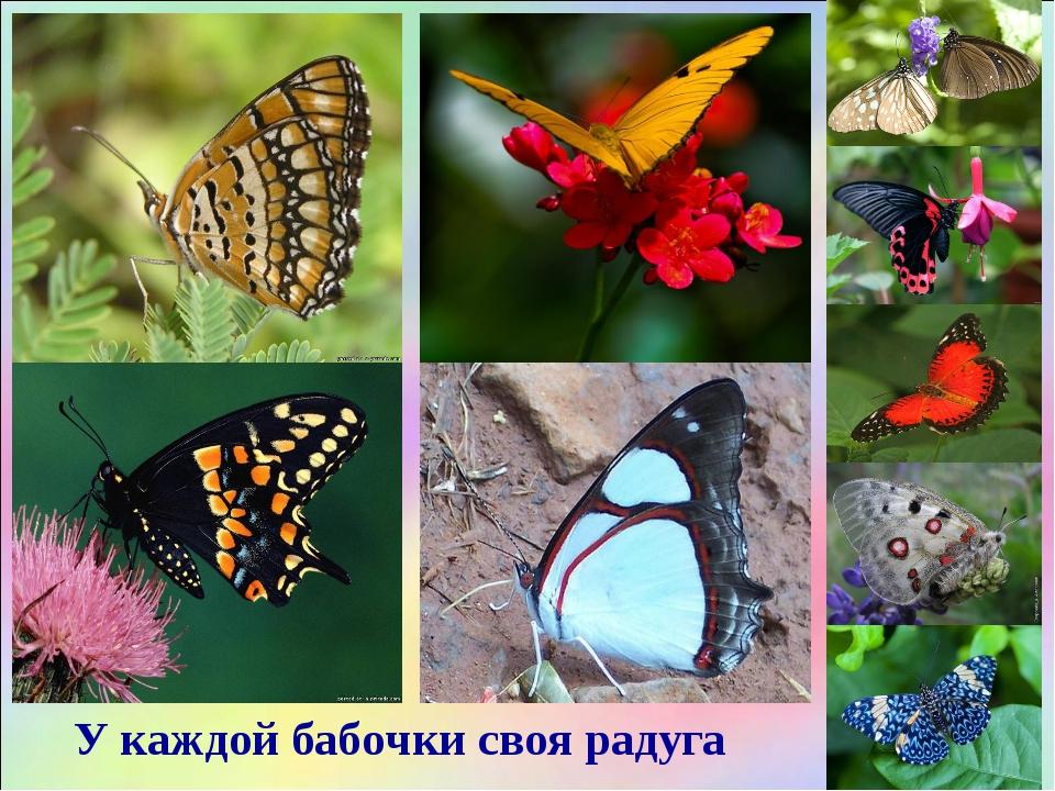 У каждой бабочки своя радуга