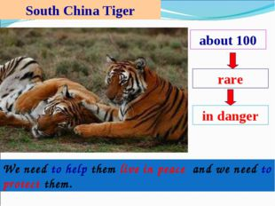 South China Tiger about 100 rare in danger We need to help them live in peace