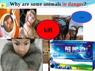 Why are some animals in danger? for food for clothes for medicine (药物)