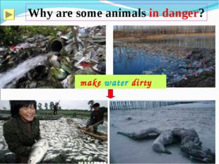 Why are some animals in danger? make water dirty
