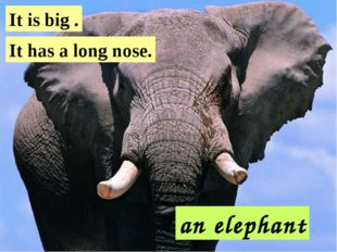 an elephant It is big . It has a long nose.