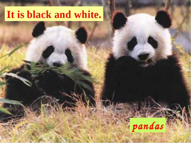 pandas It is black and white.