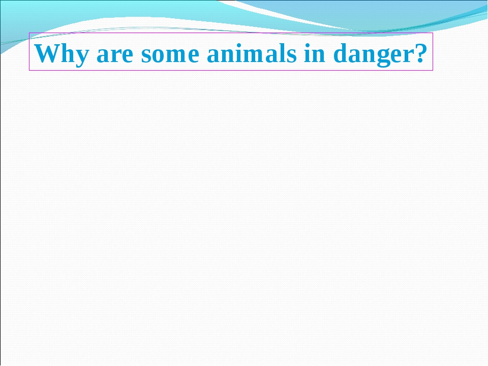 Why are some animals in danger?