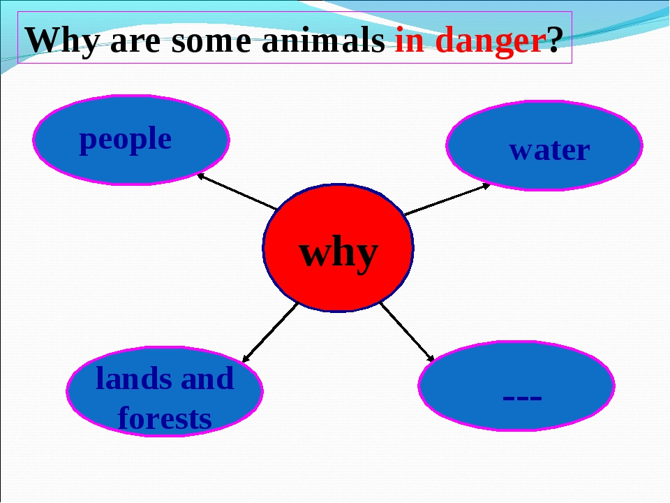 Why are some animals in danger? lands and forests water people ---