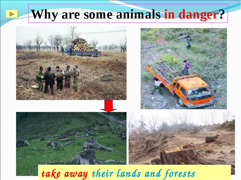 Why are some animals in danger? take away their lands and forests