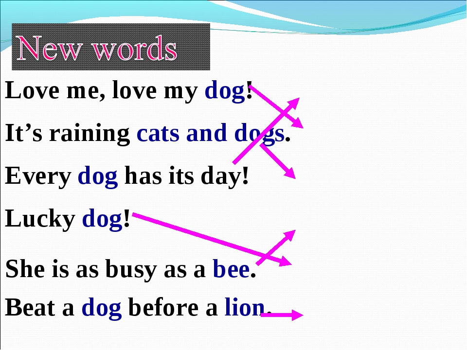Love me, love my dog! It's raining cats and dogs. She is as busy as a bee. Ev...