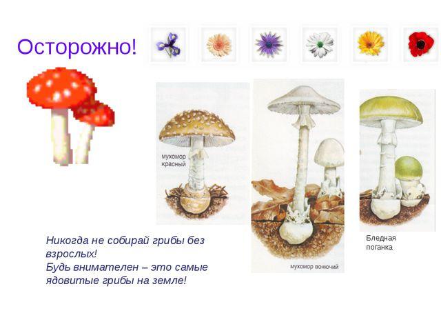 Осторожно! Никогда не собирай грибы без взрослых! Будь внимателен – это самые...