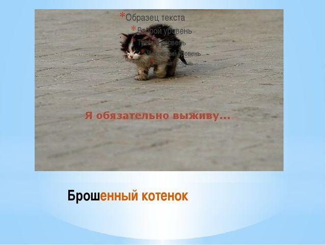 Брошенный котенок