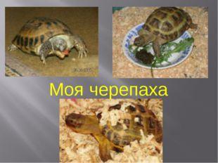 Моя черепаха