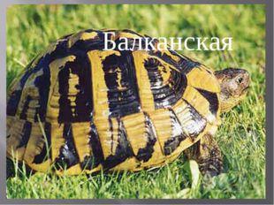 Балканская