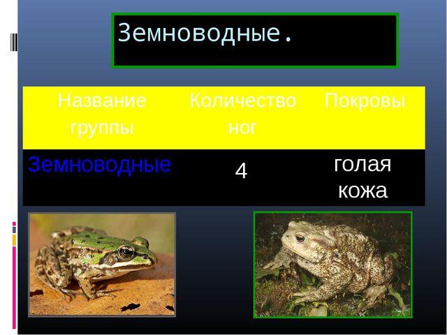 Земноводные. 4 голая кожа Название группыКоличество ногПокровы Земноводные